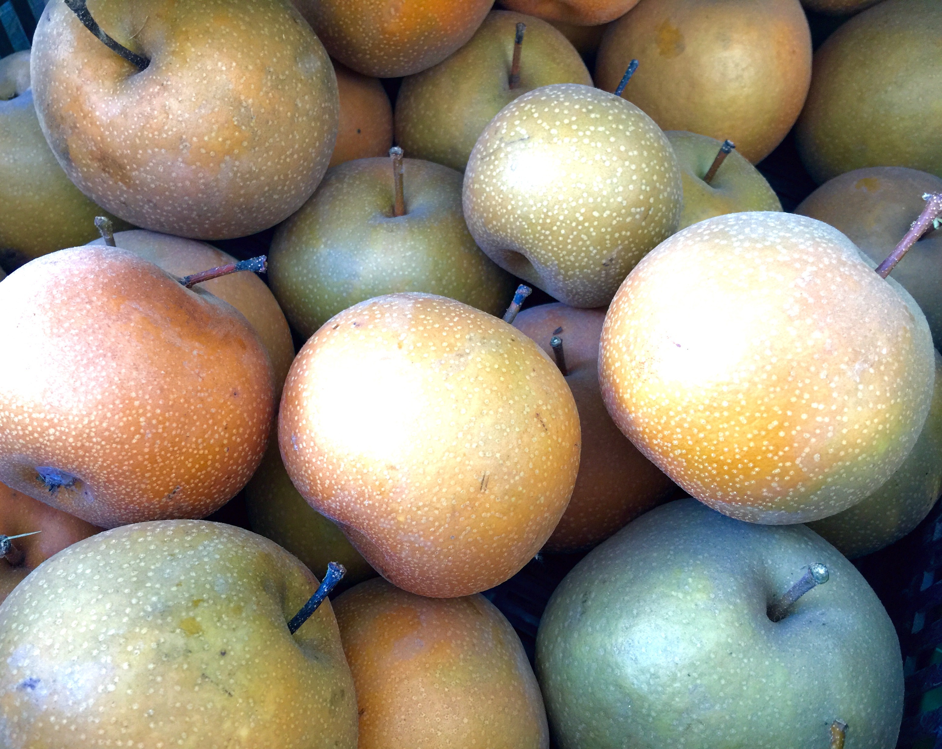 Asian pears grown at Inzana Ranch